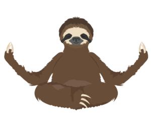 leniwiec medytuje