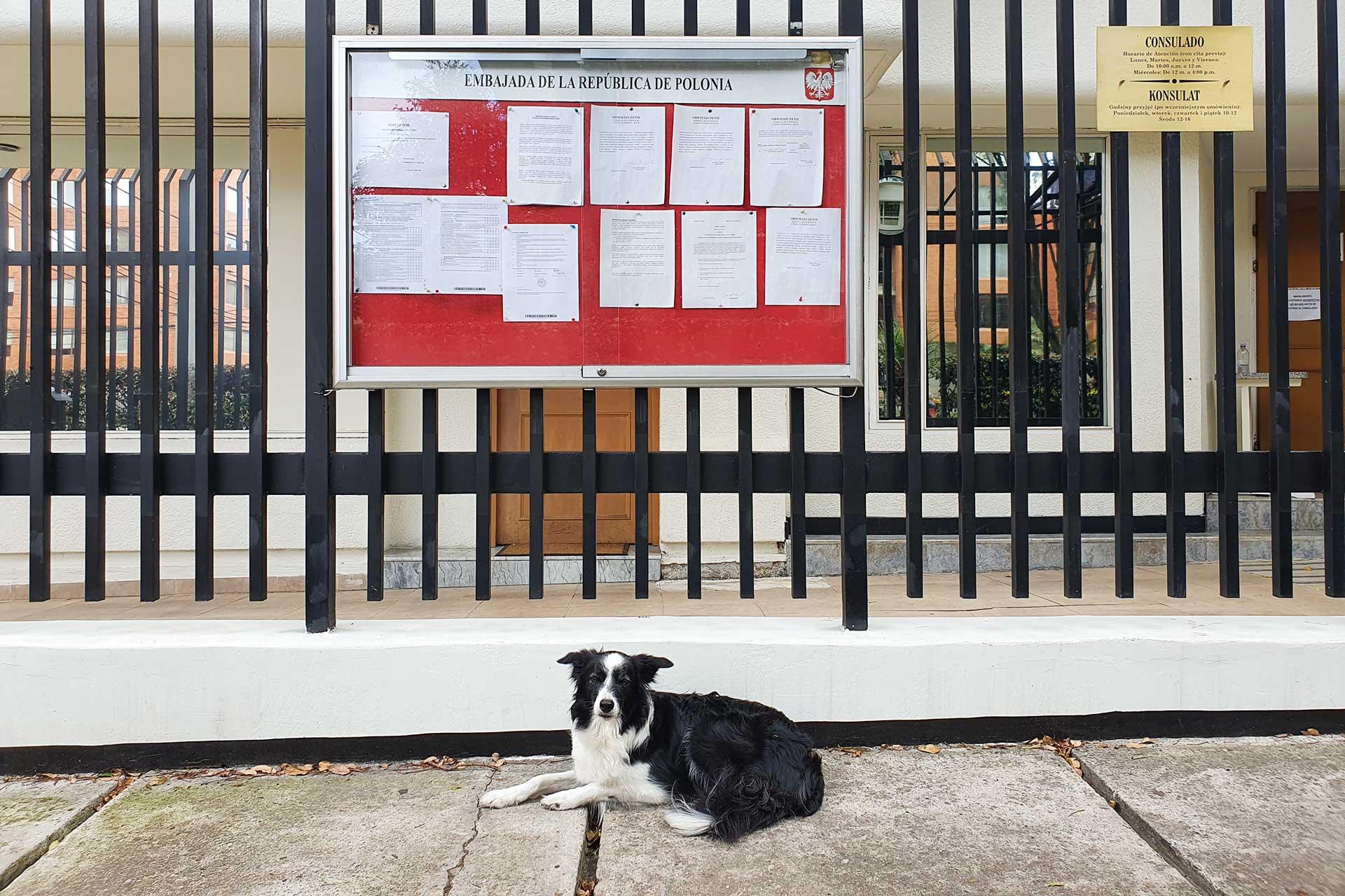 ogrodzenie przed ambasadą z tablicą ogłoszeń i leżacy pies