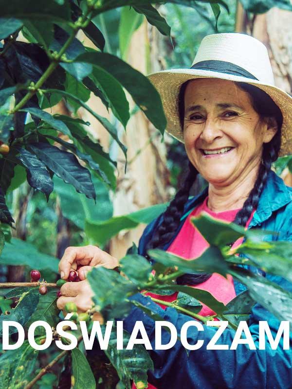 uśmiechnięta kobieta zbiera owoce kawy