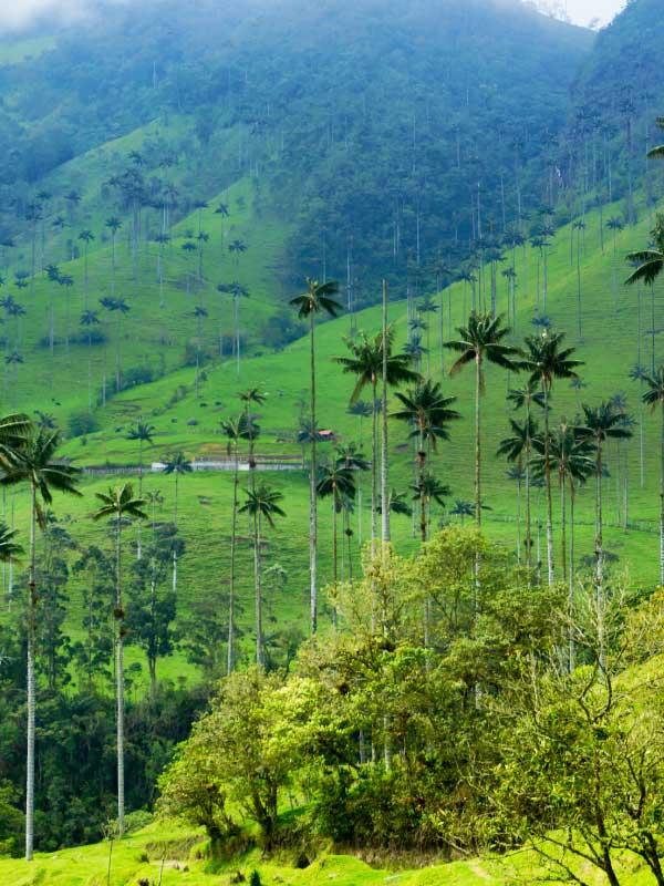 górzysta dolina z wysokimi palmami