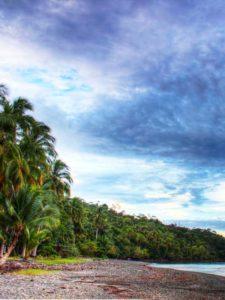 wybrzeże pacyficzne z palmami