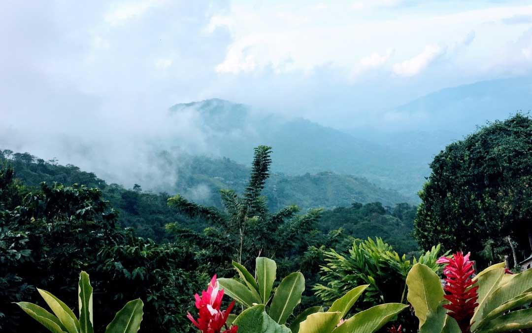 Na pierwszym planie tropikalne czerwone kwiaty, a z tyłu widok na szczyty zielonych gór