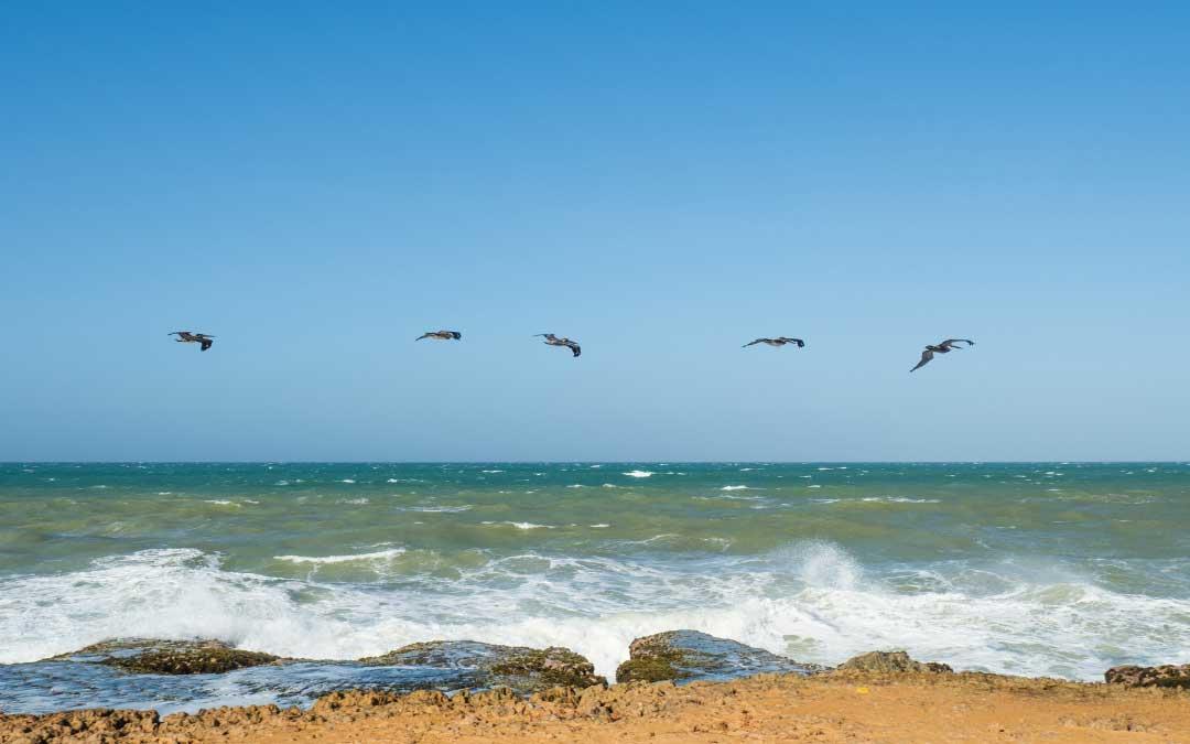 Ptaki unoszące się nad wybrzeżem morza