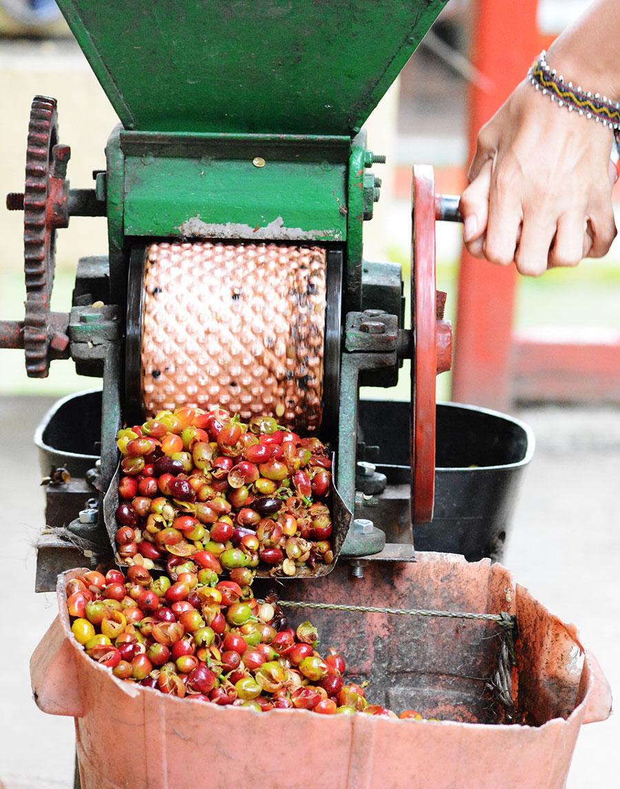 Ręczny młynek do oddzielania skórki owocu kawy od ziarna