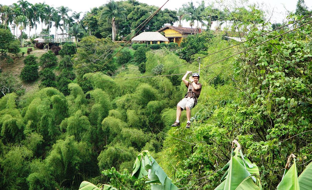 Mężczyzna lecący na tyrolce ponad koronami bambusowego lasu