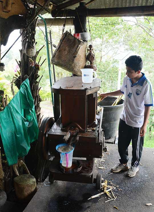 Chłopiec wyciska sok z trzciny cukrowej na tradycyjnym przyrządzie