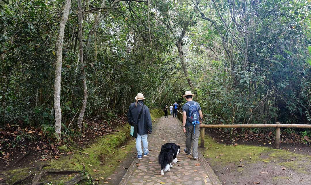 dwóch mężczyzn i pies idą ścieżką wśró lasu