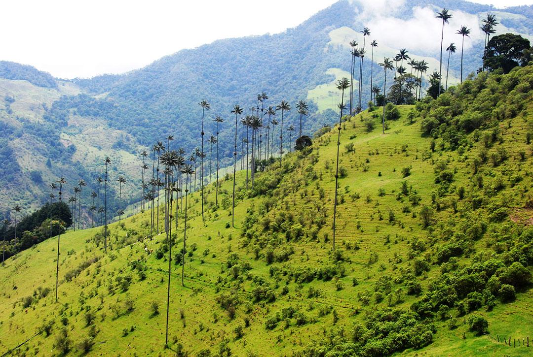 Górzyste stoki z wysoką palmą