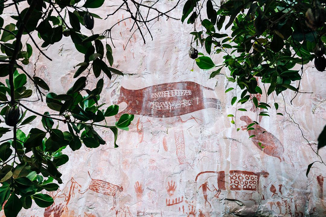 Czerwone malowidła naskalne przedstawiające dzikie zwierzęta, za ścianą liści drzew