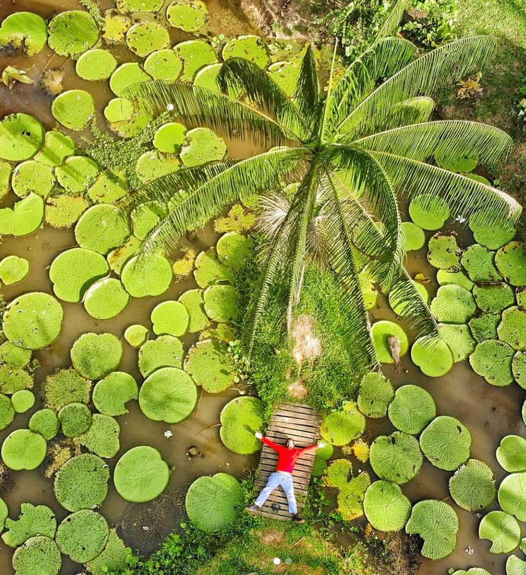 Z lotu ptaka zdjęcie na jezioro wypełnione wiktorią amazońską i męzczyznę leżaego na podeście w czerwonej koszuli